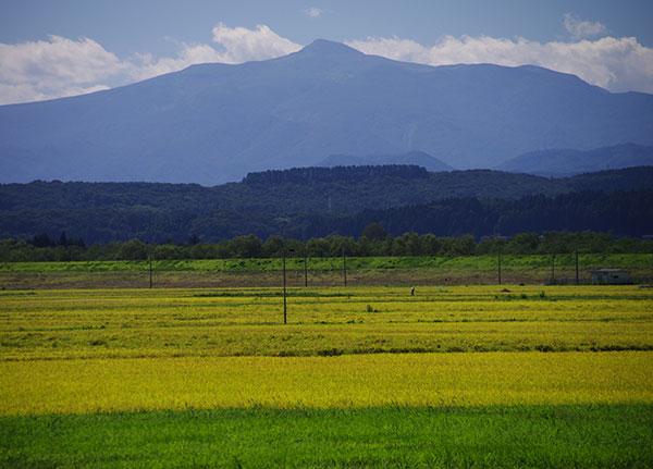色づく田と須川岳