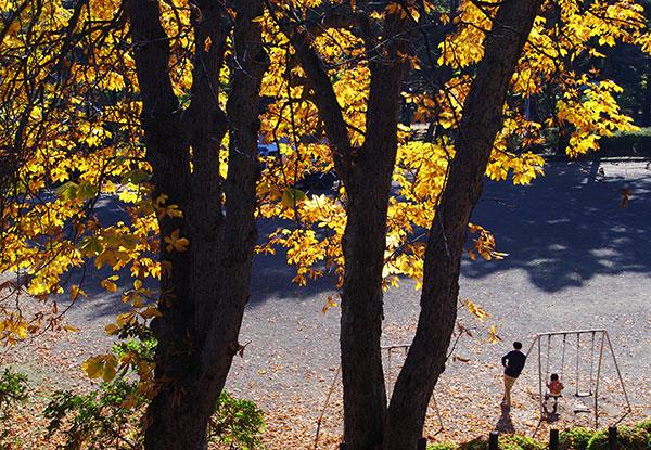 盛岡城址公園の陽だまり