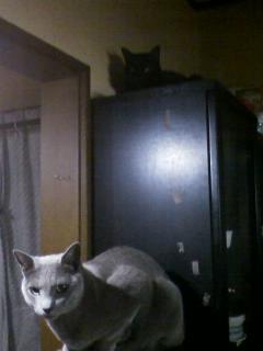猫食器棚1
