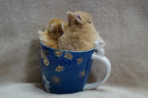 15カップ