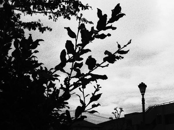 Kichijoji_DH_131110_0011.jpg