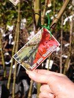 Tree sample-S-1