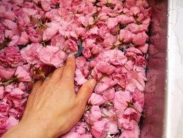 Sakura-washing