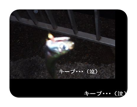 ④P9290976
