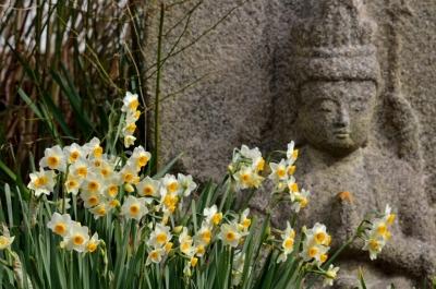 水仙と石仏