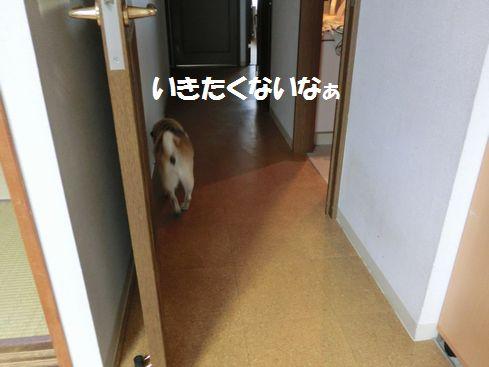 CIMG3940.jpg