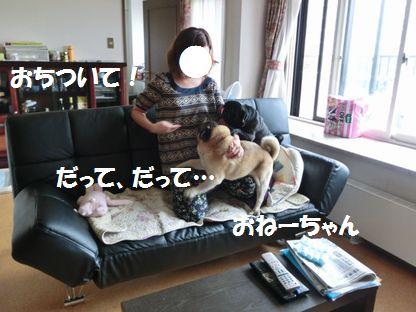 CIMG4103.jpg
