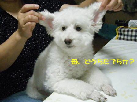 b190.jpg
