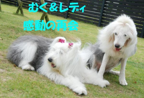 DSC_0095_convert_20130918140131.jpg