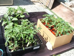 菜園2013042806