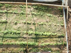 菜園2013042812