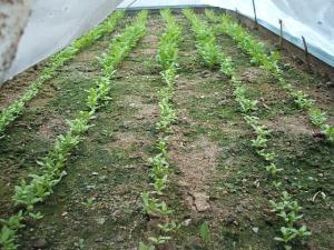 菜園2013042811
