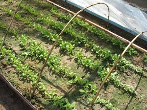 菜園2013042813