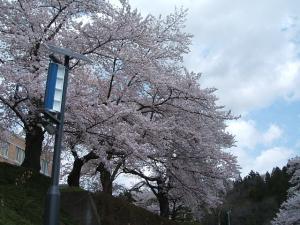 千厩支所2013042824
