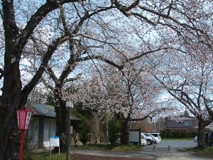 館山公園2013042803