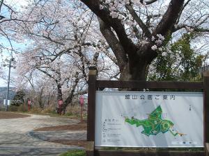 館山公園2013042801