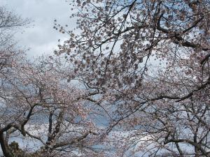 館山公園2013042807