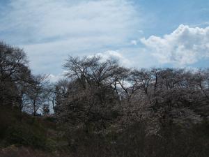 館山公園2013042812