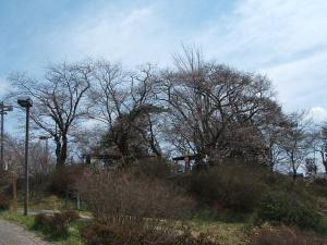 館山公園2013042811