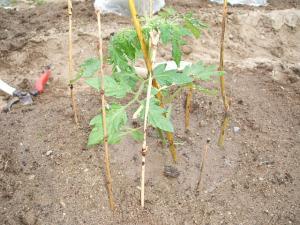 菜園20130505231