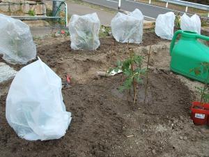菜園20130505229