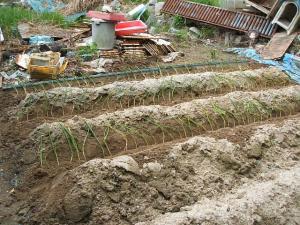 菜園20130516001