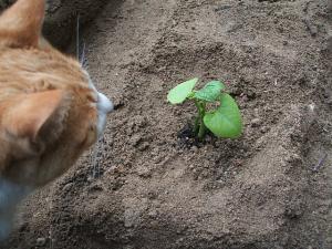 菜園20130516013