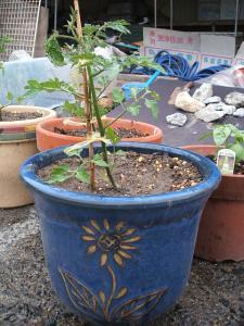 j重箱石の家庭菜園20130518051