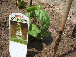 重箱石の家庭菜園20130518006