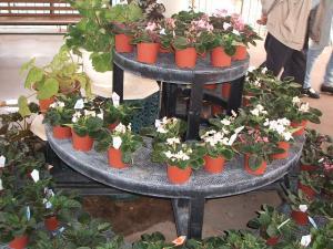 花と泉の公園。ベゴニア館2013-05-26-146
