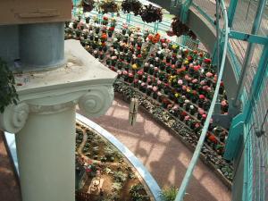 花と泉の公園。ベゴニア館2013-05-26-142