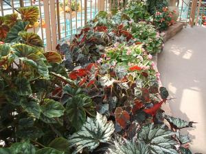 花と泉の公園。ベゴニア館2013-05-26-153