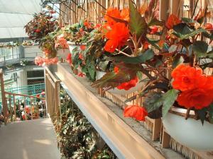 花と泉の公園。ベゴニア館2013-05-26-152