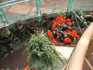 花と泉の公園。ベゴニア館2013-05-26-151