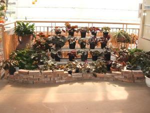 花と泉の公園。ベゴニア館2013-05-26-149