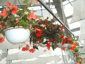 花と泉の公園。ベゴニア館2013-05-26-150