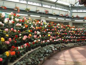 花と泉の公園。ベゴニア館2013-05-26-159