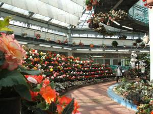 花と泉の公園。ベゴニア館2013-05-26-157