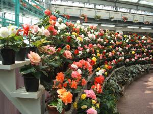 花と泉の公園。ベゴニア館2013-05-26-156