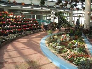 花と泉の公園。ベゴニア館2013-05-26-160