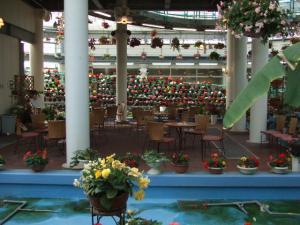 牡丹&ベゴニア園2013-05-26-212