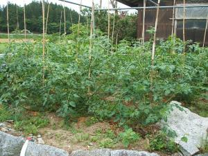 家庭菜園20130616002