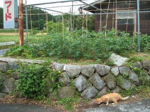 家庭菜園20130616001
