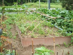 家庭菜園20130616012