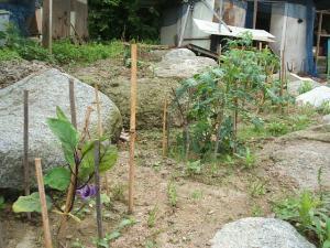 家庭菜園20130616038