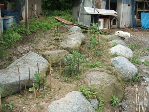 家庭菜園20130616035