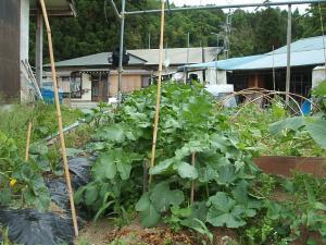 家庭菜園20130616071