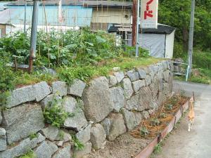 家庭菜園20130616072