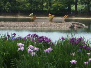 毛越寺あやめ祭り2013-06-22-028