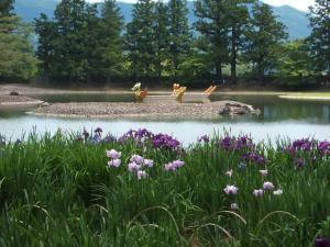 毛越寺あやめ祭り2013-06-22-027